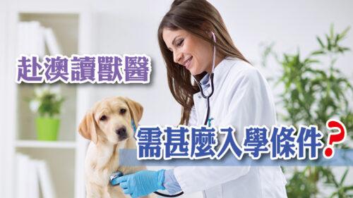 赴澳讀獸醫需甚麼入學條件?