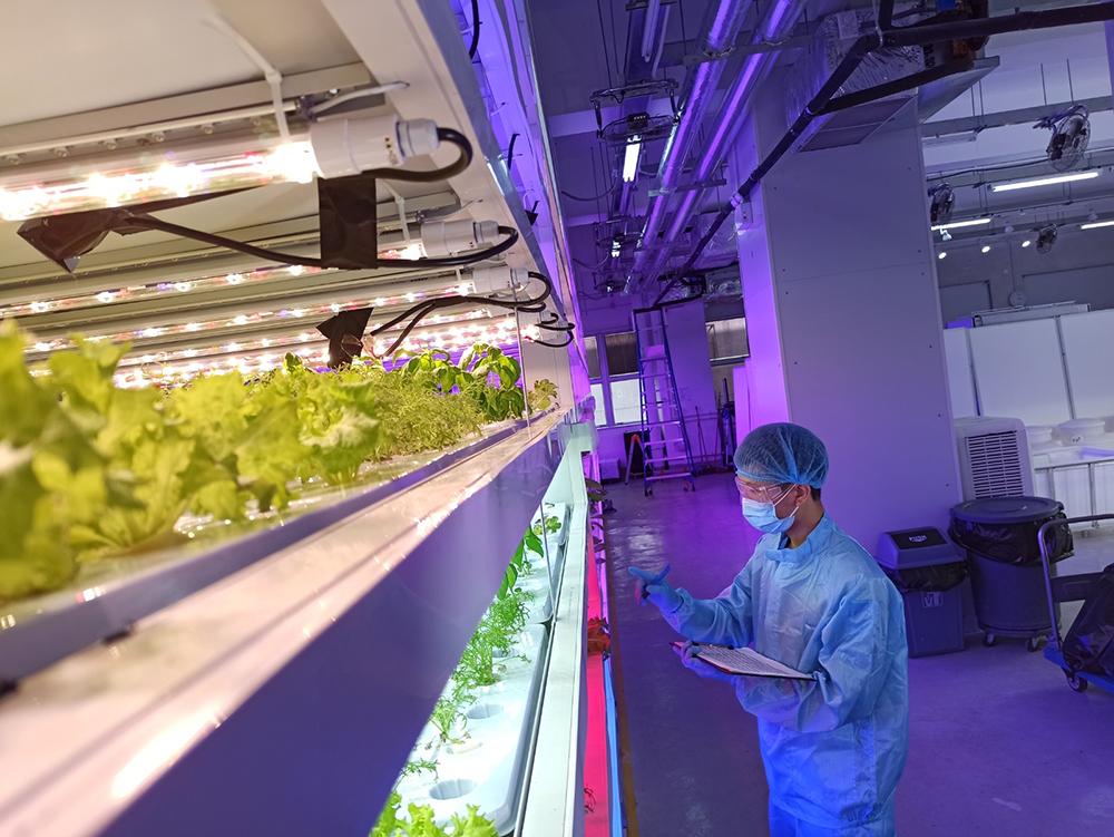 透過精密地調控光線、溫度及濕度等各項環境條件,水耕種植法有助提升種植效率
